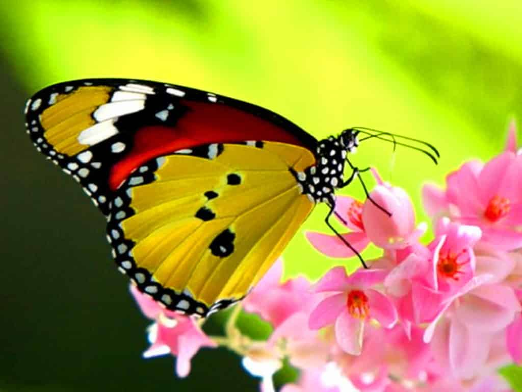 Pictures Of A Butterfly 48